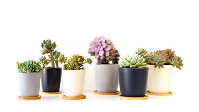 succulent-plants-in-pots-succulent-plants-in-pots-planting-succulents-in-containers-indoors-615x347